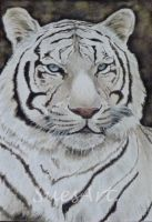White Tiger by SueMArt
