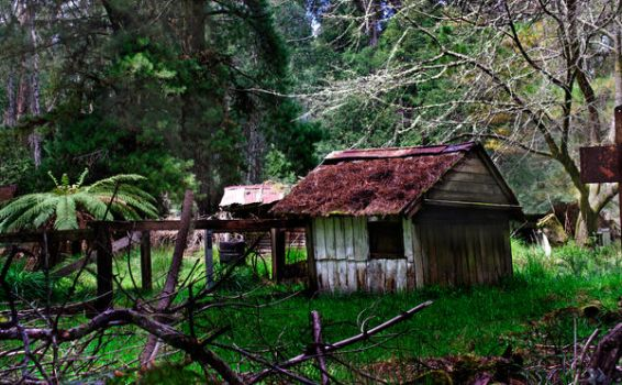Cottage in the wood by roentarre