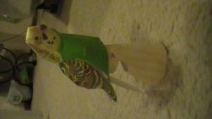 Budgerigar papercraft by NinjaKirby144
