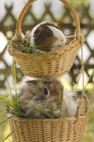 basket full of cuteness by Leny97