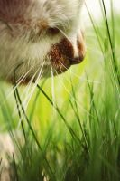 cat in grass by shaina74