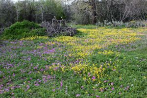 Field of Flowers 4 by Ironmountain01