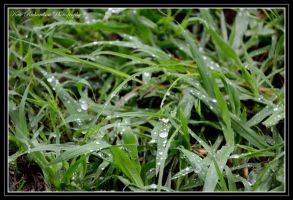 Water drops on grass by DesignKReations