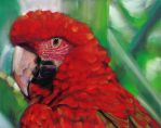 Red Parrot by J-A-N-I-N-E