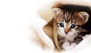 Kitten Skin header by hayzy