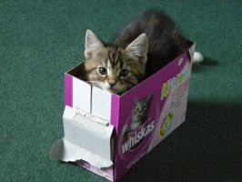 Free kitten with every box 1 by StephScribbles