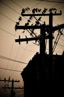 Hanging out at the power lines by jazzypao