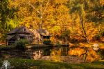 In The Autumn Woods by JustinDeRosa