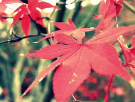Red Leaves by BloodyMinded6