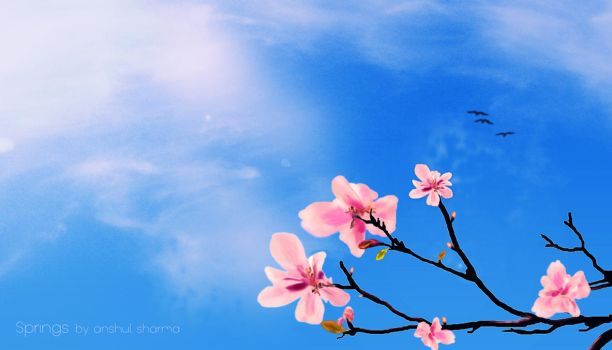 Days of Spring by Anshul-Sharma