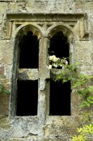 A Rose in the Window by EarthHart