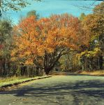 Skyline Drive by rdungan1918