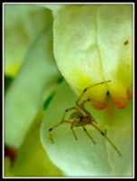 Spider by tere-fere-qq