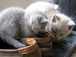 Kittens in a shoe by Goldie4224