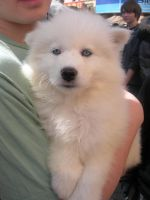 ADORABLE PUPPY by AnimalLover4Ever