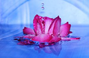dance of water and a rose by firxxx