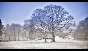 Winter Wisdom Tree by BenoitJWild