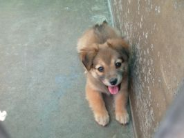 Pound 1 by EveryRoseStock