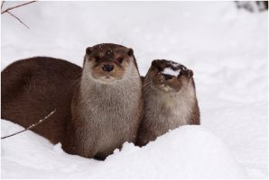2010-30 The Otters by W0LLE
