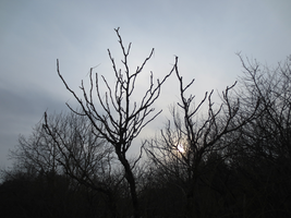 Sky Through Branches 2 by somnia-stock