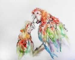 Watercolor parrots by Xacolate