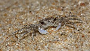 Ghost Crab is not Amused by fractalfiend