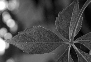 Stark Raving Green by SMBaird
