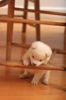Cute puppy by Sommer311