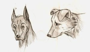 Dog Sketches by Ionday