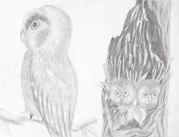 one owl and two in a tree by dakuness