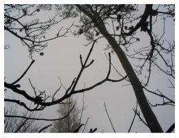 Trees and Fog by anotherview