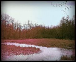 Marsh In Spring by surrealistic-gloom