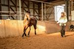 Everyday Horse Training - Lunging indoors by LuDa-Stock