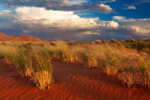 Desert Wind by hougaard