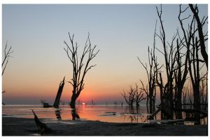 Drowned Trees Sunset 04 by michref