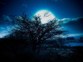 Blue Moon by MantisMoon