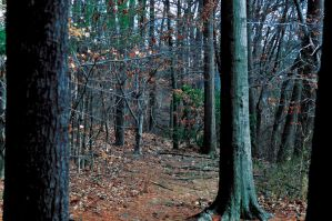 Wooded Area Stock 6 by FairieGoodMother