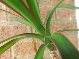 colours of a house plant by CodedNotion