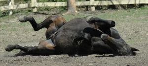 Pete rolling 2 by stockhorse