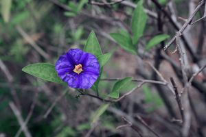 Purple flower by kerostock