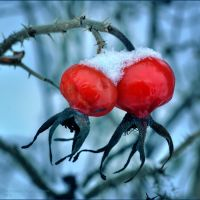 Frozen berries by tarnavska91