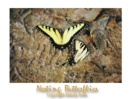 Nesting Butterflies by sacredspace