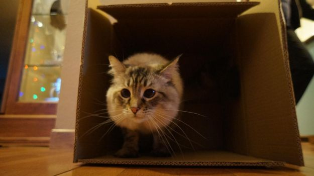 Boxed Cat by tundra-timmy