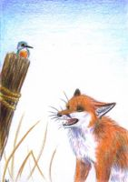 ACEO Story of the kingfisher by wiltvanc
