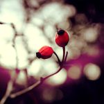 A bokeh play by worthyG