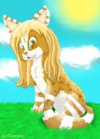 Ambrity by Cheetany