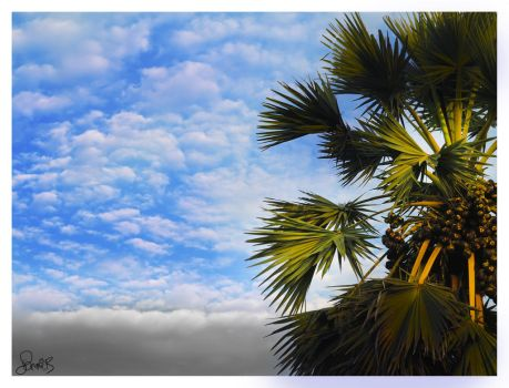 Palm Cloud by sammib