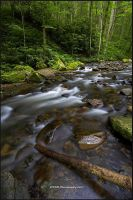Mountain Stream by TRBPhotographyLLC