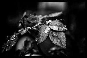 raindrops by demor