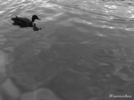 Duck All Alone by missionverdana